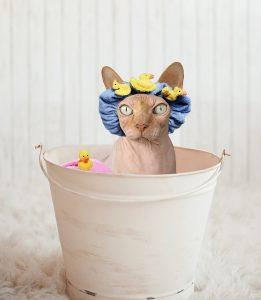 sphynx-cat-bath